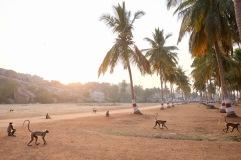 Die Affen, die durch die alten Tempel springen, sind für Touristen unterhaltsam, für Einheimische anstrengend