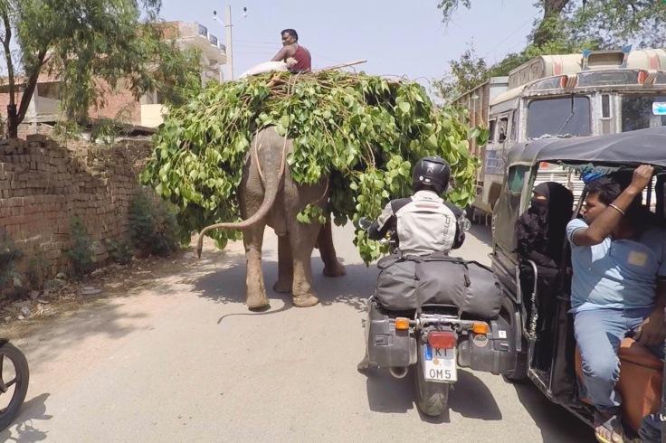 elephant_uttarpradesh
